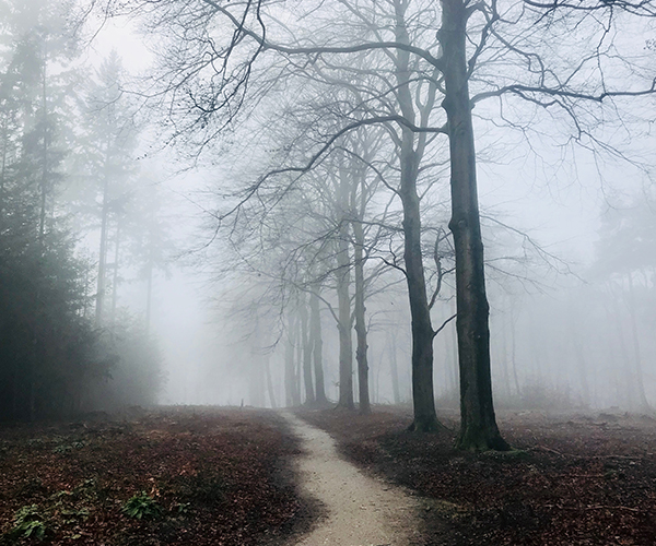 Photo of a forest path in the fog